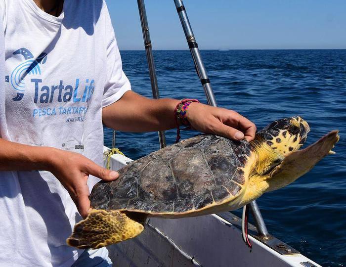 La tartaruga Sandra torna in mare