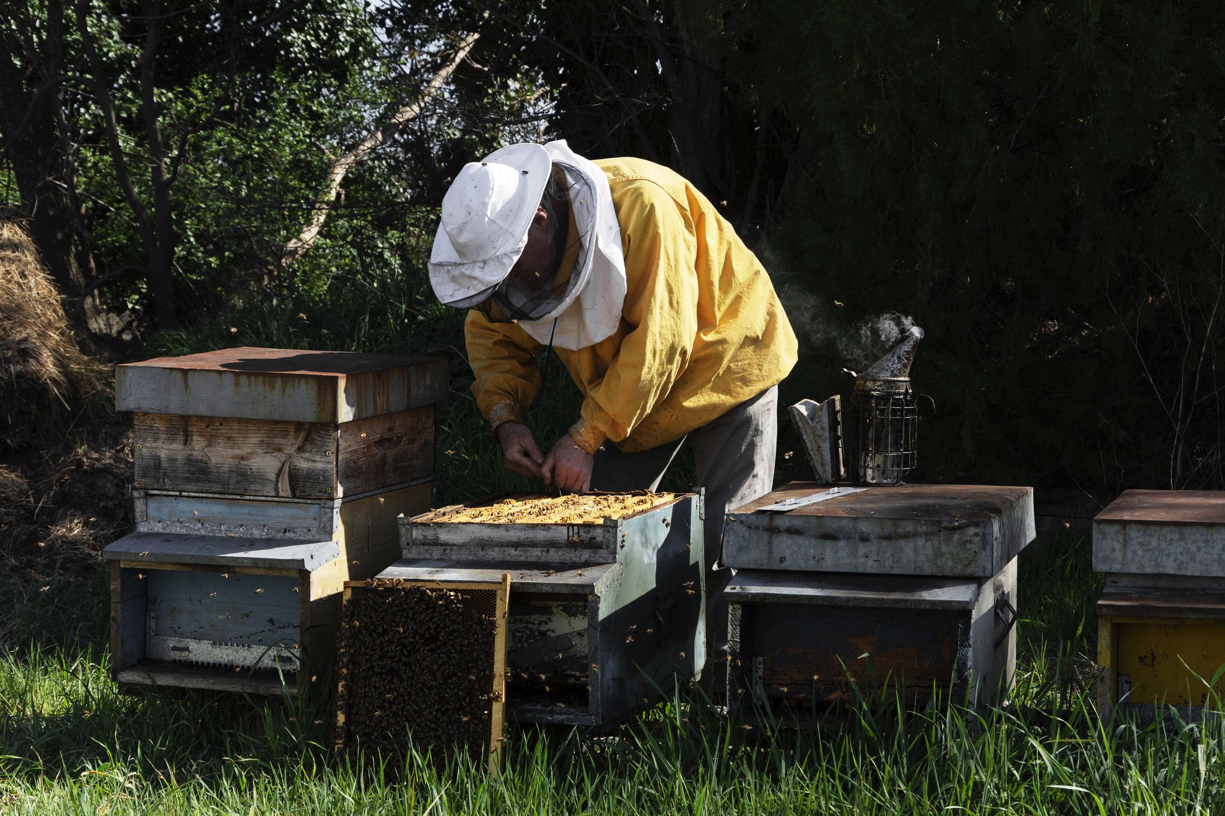 Uomo ape, un rapporto che dura da 9000 anni