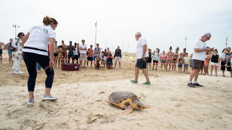 Liberate in mare le due tartarughe ripescate a Cesenatico
