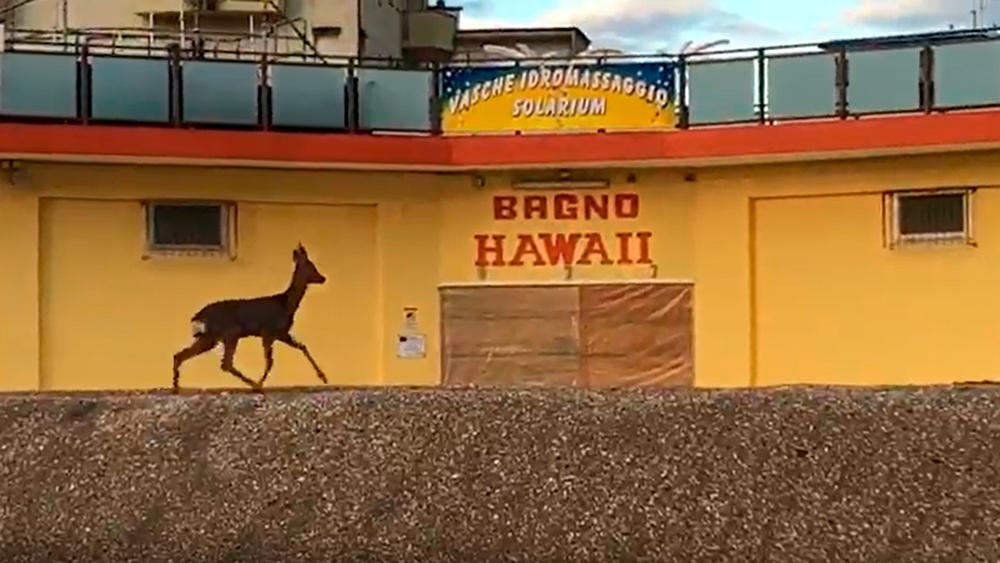 VIDEO In spiaggia arriva Bambi