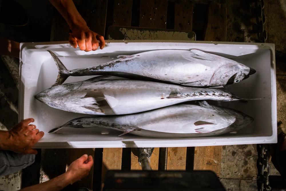 VIDEO Il Calimero torna con un carico di tonno