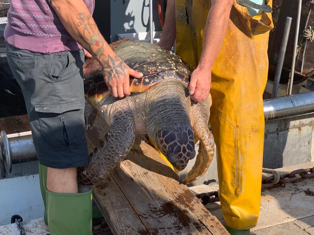 Pilar la tartaruga e Pepe il trigone avvistati a Cesenatico