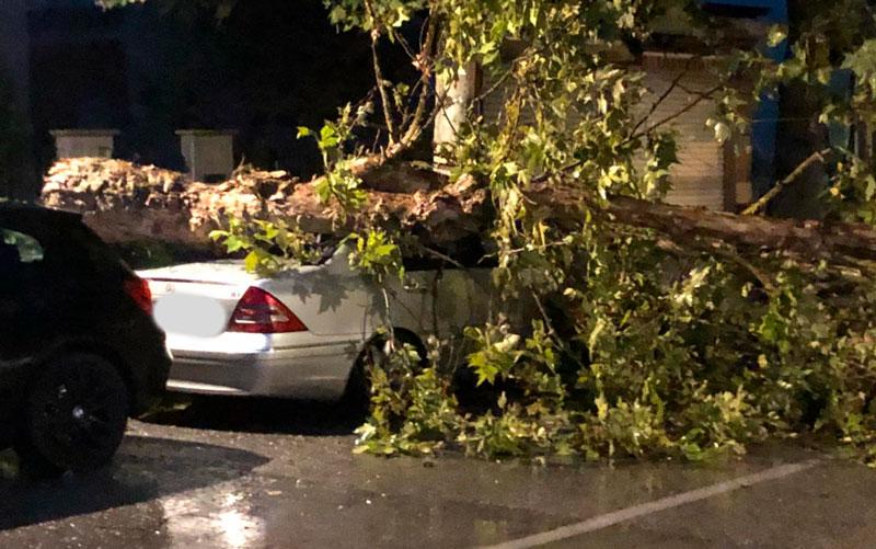 Maltempo, crolla albero su un'auto – FOTO