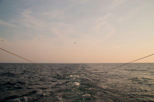 pesca cesenatico porto