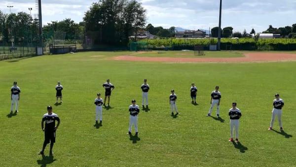 baseball elephas
