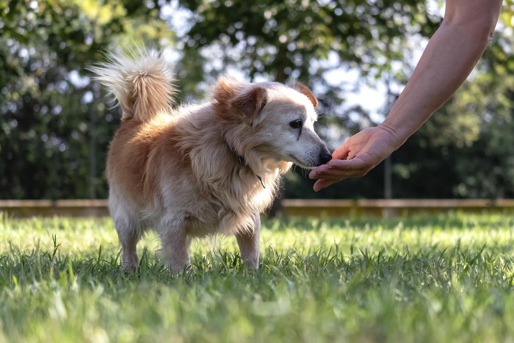 Anche nel 2021 il canile di Cervia ospiterà i randagi di Cesenatico