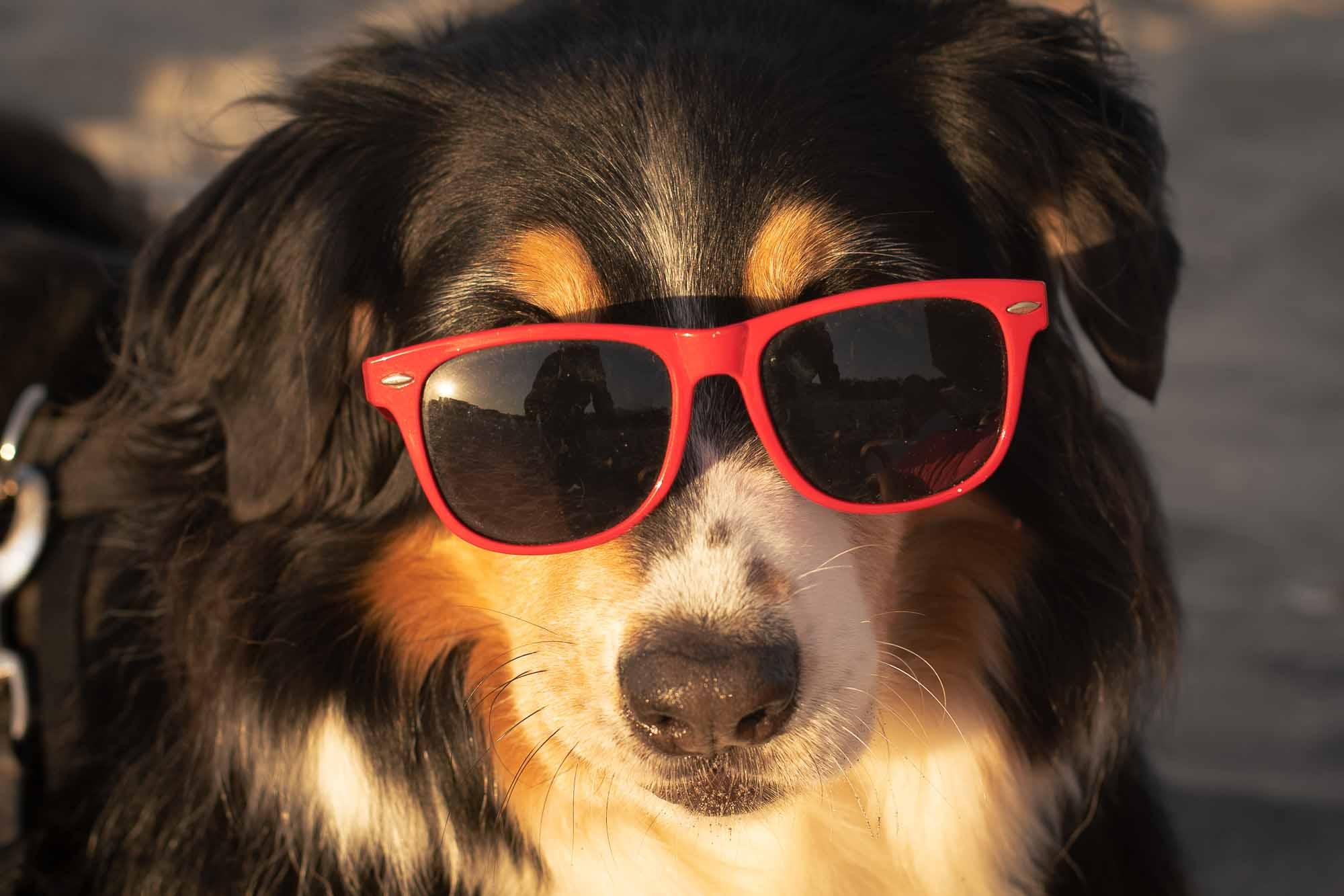 Cani in spiaggia a Cesenatico la vacanza piace