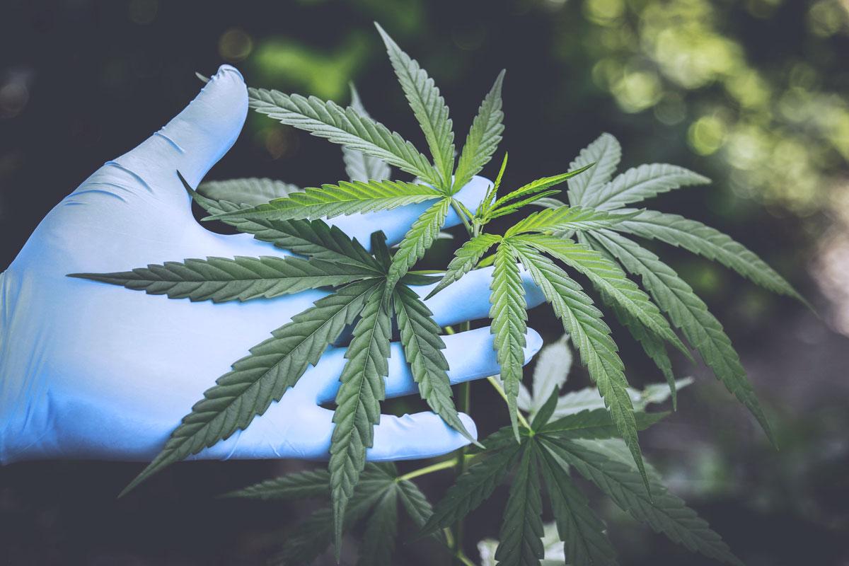 Cannabis legale? Cosa dicono gli studenti di Cesenatico